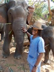 Thai Elephant